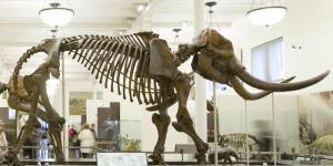 warren-mastodon